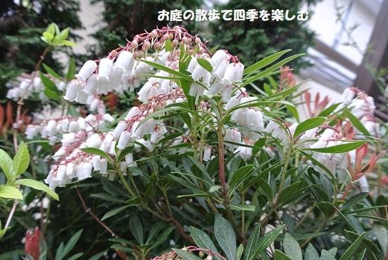 niwa332.jpg