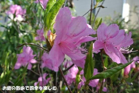 satuki32.jpg