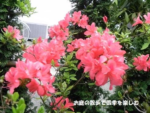 satuki33.jpg