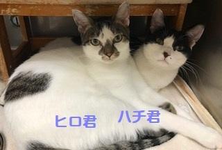 hachihiro_20180506015559aee.jpg