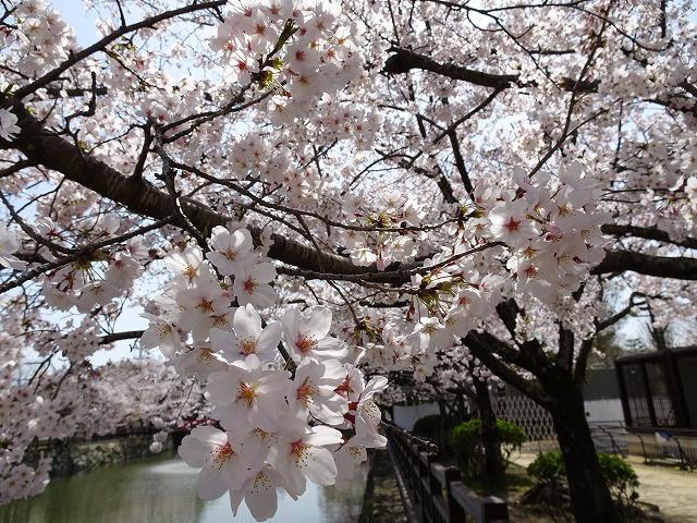 姫路城180331⑩