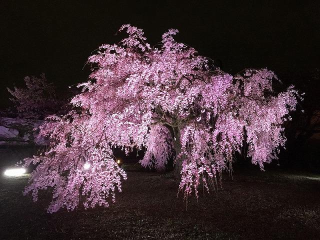 姫路城180404夜桜②