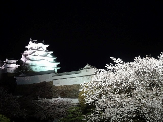 姫路城180404夜桜⑤