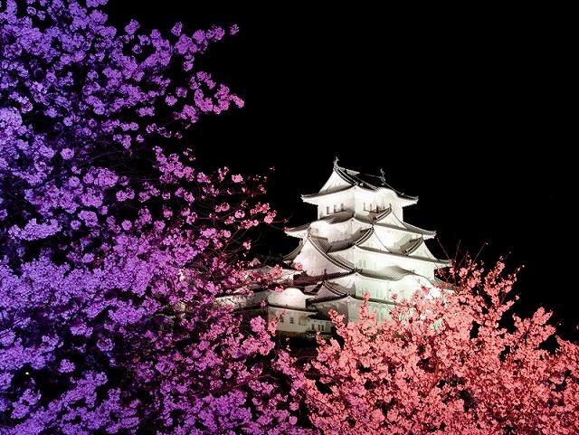 姫路城180404夜桜⑧