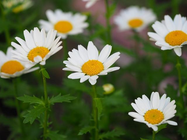 180415花