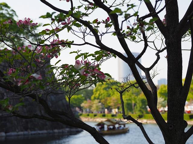 180421大阪城⑦