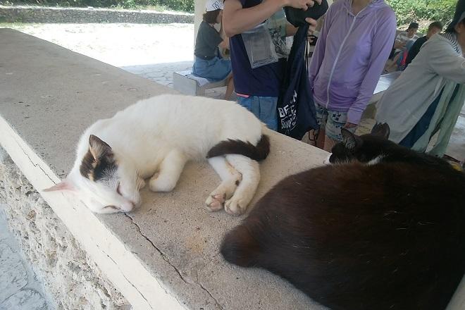 2018竹富島旅行 コンドイビ-チで寝る猫