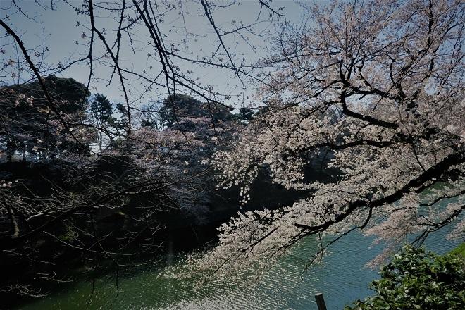 2018千鳥ヶ淵の桜(緑道側・その5)