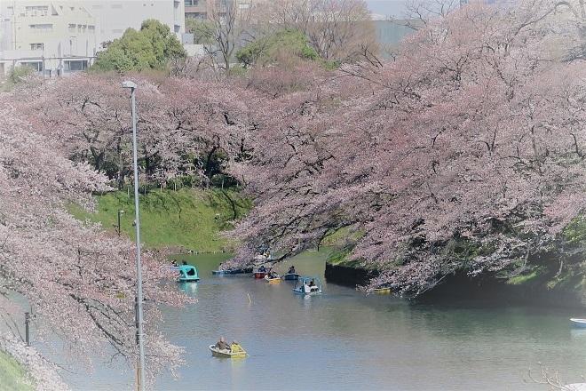 2018千鳥ヶ淵の桜(緑道側・その10)