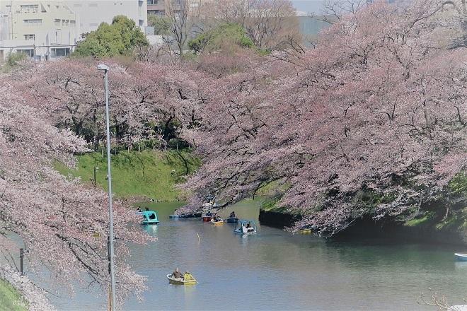 2018千鳥ヶ淵の桜(北の丸公園側・その4)