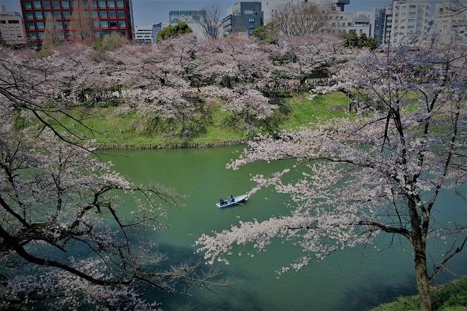 2018千鳥ヶ淵の桜(北の丸公園側・その10)