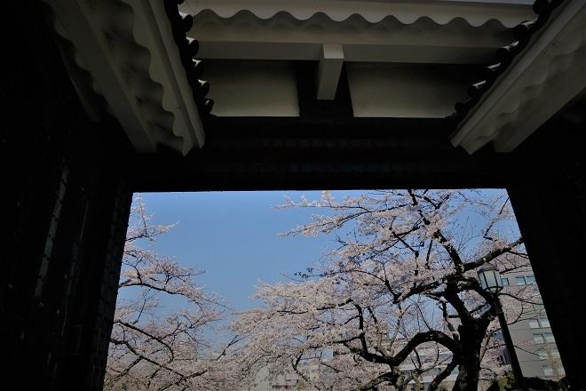 2018千鳥ヶ淵の桜(北の丸公園側・その13)
