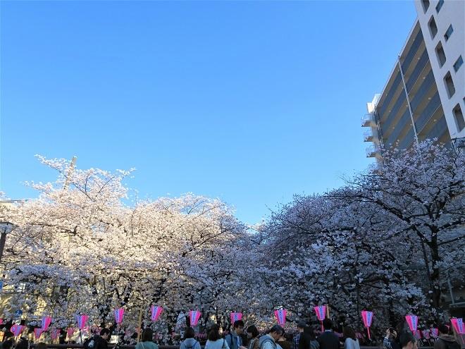 2018目黒川の桜(8)