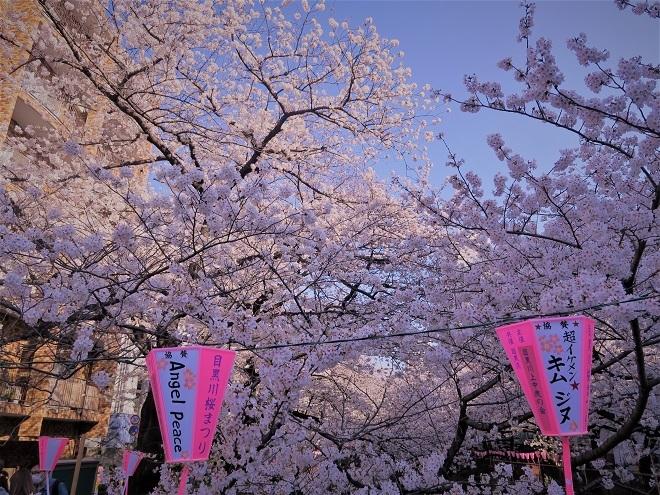 2018目黒川の桜(9)