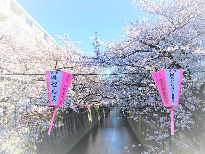 2018目黒川の桜(10)