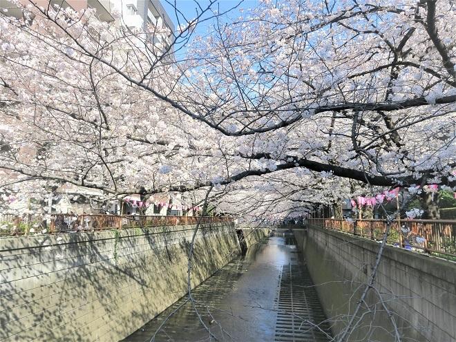 2018目黒川の桜(15)