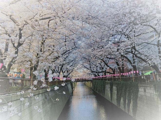 2018目黒川の桜(17)