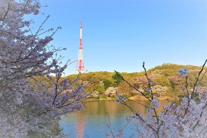 2018三ツ池公園の桜(2)