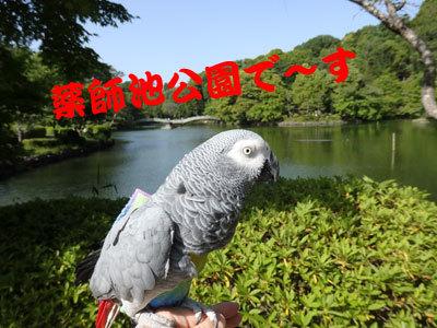 1_薬師池公園