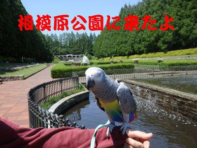 3_相模原公園