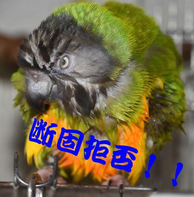 9_チャッピ