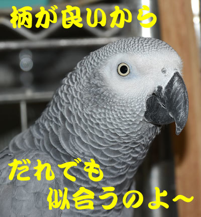 7_似合う