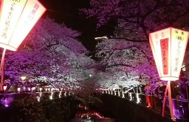 目黒川 櫻