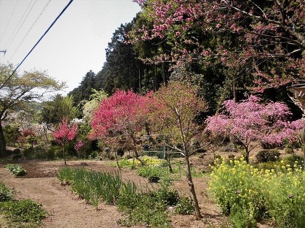 2 18.4.10 物見山ハイク里山風景 (113)