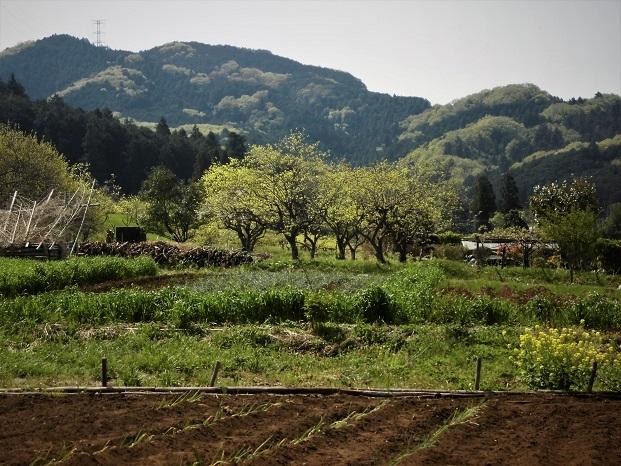 4 18.4.10 物見山ハイク里山風景 (140)