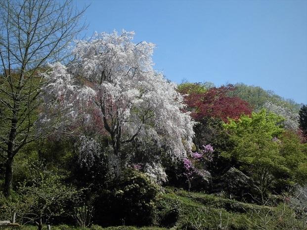 5 18.4.10 物見山ハイク里山風景 (28)