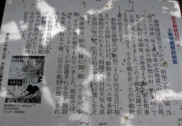 4 18.4.30 大宮公園  (62)