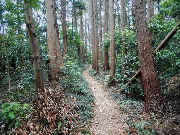 18.5.2 武蔵嵐山・仙元山 (91)