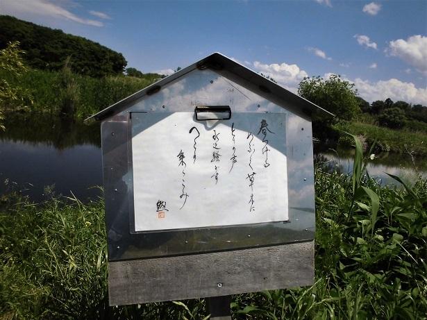 2 南九州では、冬季でもやや暖かい雨がふり水かさが増すと鹿児島の鶴田ダムが一月下旬から乗込みが始まり、産卵がはじまる。)