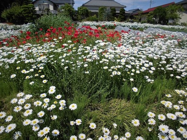 6 18.5.4 川島町・ママチャリング (126)