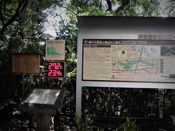 3 18.5.15 等々力渓谷スケッチハイク (125)