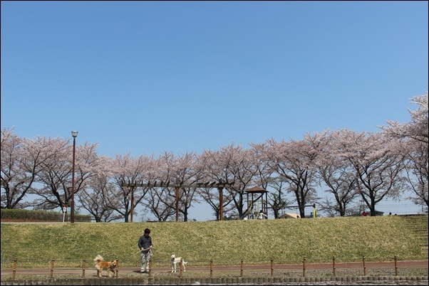 008しらさぎ公園