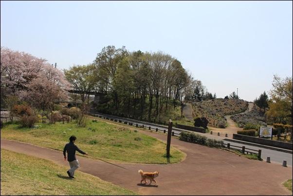017しらさぎ公園