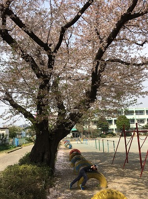 写真 2018-04-02 16 06 51