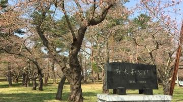 青森桜歩き2018 (3)_500