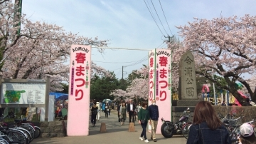 青森桜歩き2018 (16)_500