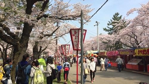 青森桜歩き2018 (17)_500
