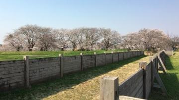 青森歩き2 (1)_500