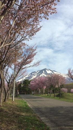 桜並木ウオーク4-30 (4)_500