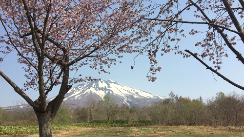 桜並木ウオーク4-29 (3)_500