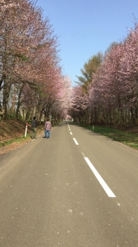 桜並木ウオーク4-29 (4)_500