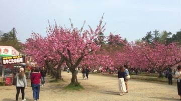 弘前公園5-1 (2)_500