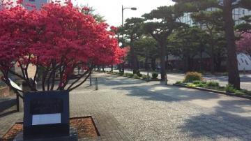 十和田歩き5-4 (18)_500