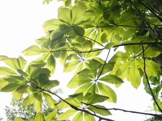 kanakurayama0047.jpg