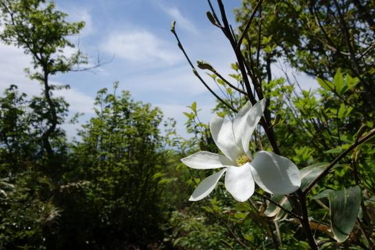kanakurayama0129.jpg