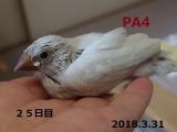 PA4~25日目